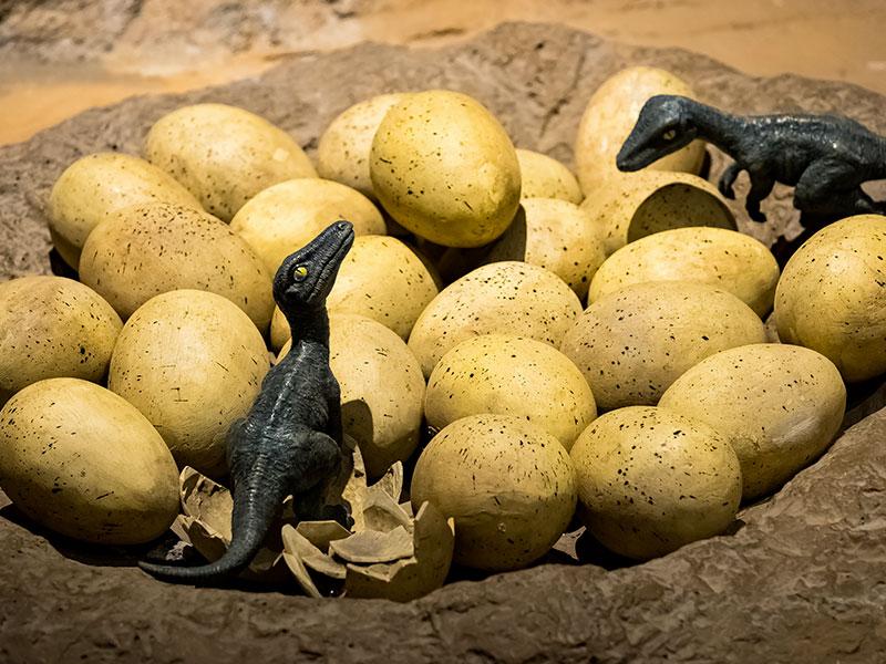 activites-oeufs-de-dinosaure-dinopedia-grand-combe-ales-gard2