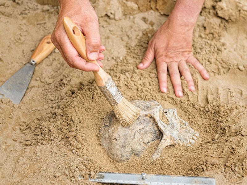 atelier-de-recherche-archeologie-dinosaure-parc-aventure-la-foret-fossile-la-grand-combe-ales