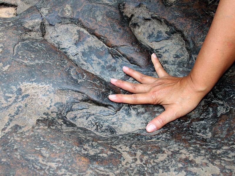 rocher-fossile-parc-aventure-la-foret-fossile-la-grand-combe