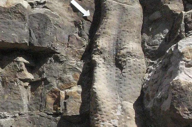tronc-fossilise-la-foret-fossile-la-grand-combe-ales2