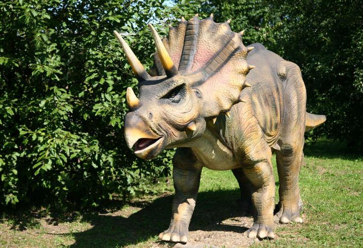 Triceratops-dinopedia-parc