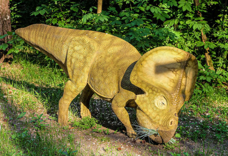 protoceratops-dinopedia-parc