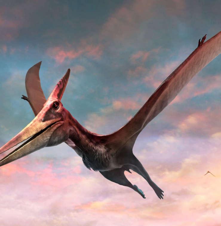 pteranodon-dinopedia-parc
