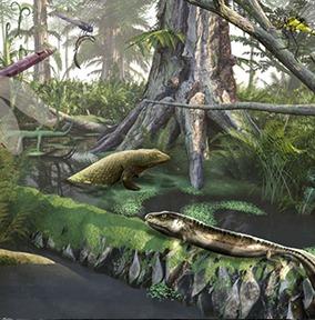 fossile-carre